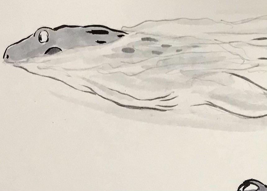 カエルのおじさん10m自由形 10M-FREESTYLE