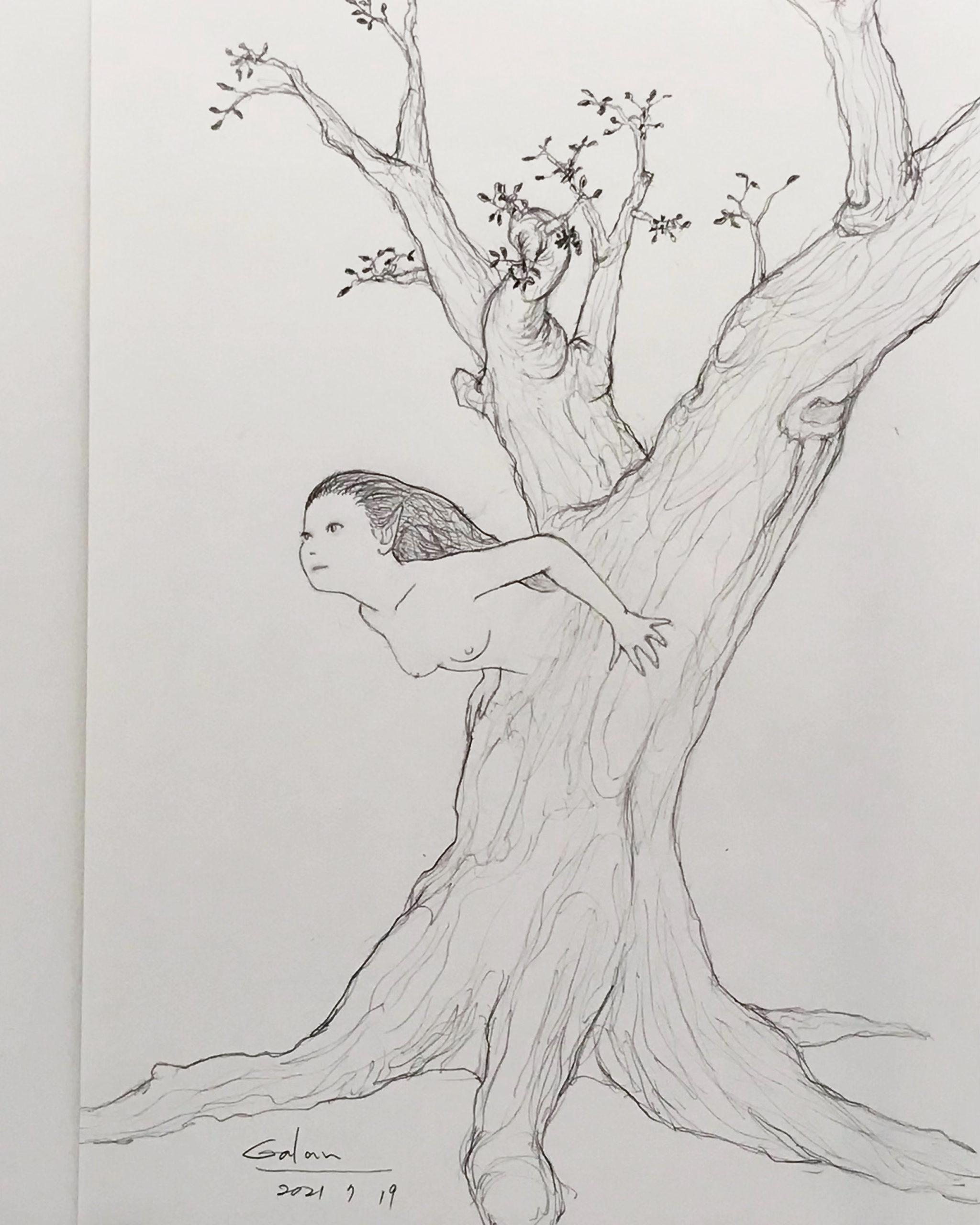 古木の妖精 PENCIL